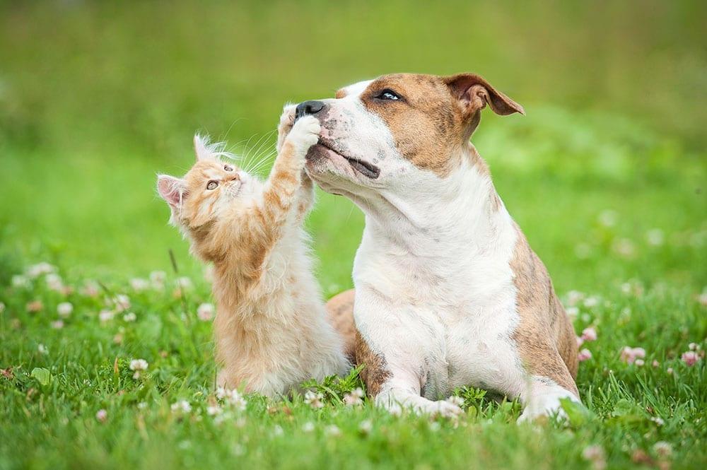 new friend pet wellness plan