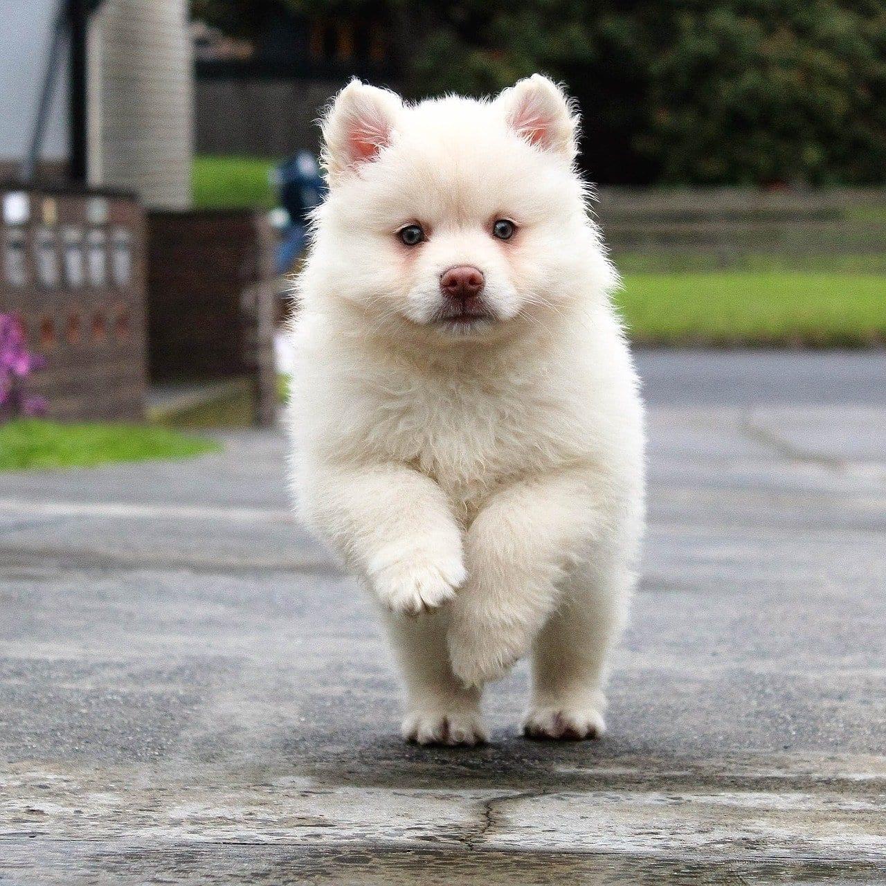 puppy after veterinary wellness plan